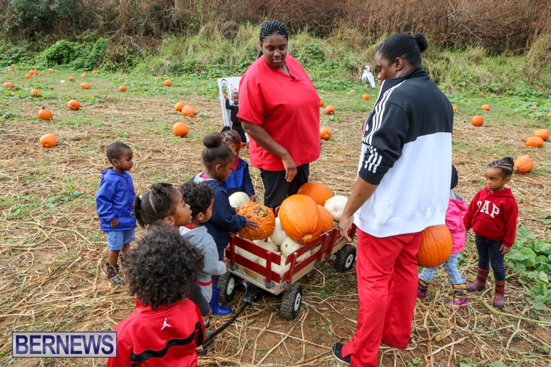 JJ-Produce-Pick-Your-Own-Pumpkins-Bermuda-October-23-2015-69
