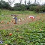 J&J Produce Pick Your Own Pumpkins Bermuda, October 23 2015-7
