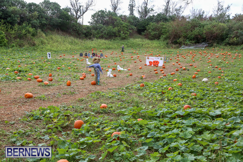 JJ-Produce-Pick-Your-Own-Pumpkins-Bermuda-October-23-2015-7