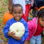 J&J Produce Pick Your Own Pumpkins Bermuda, October 23 2015-70