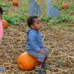J&J Produce Pick Your Own Pumpkins Bermuda, October 23 2015-71