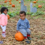 J&J Produce Pick Your Own Pumpkins Bermuda, October 23 2015-72