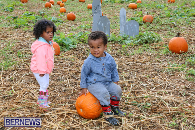 JJ-Produce-Pick-Your-Own-Pumpkins-Bermuda-October-23-2015-72