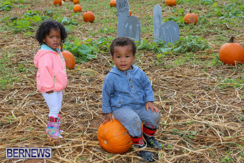 JJ-Produce-Pick-Your-Own-Pumpkins-Bermuda-October-23-2015-73
