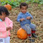 J&J Produce Pick Your Own Pumpkins Bermuda, October 23 2015-74