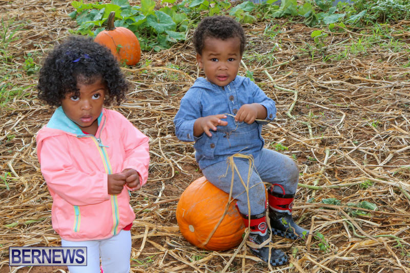 JJ-Produce-Pick-Your-Own-Pumpkins-Bermuda-October-23-2015-74