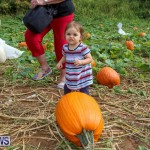J&J Produce Pick Your Own Pumpkins Bermuda, October 23 2015-75