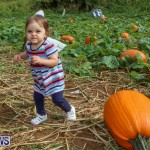 J&J Produce Pick Your Own Pumpkins Bermuda, October 23 2015-76