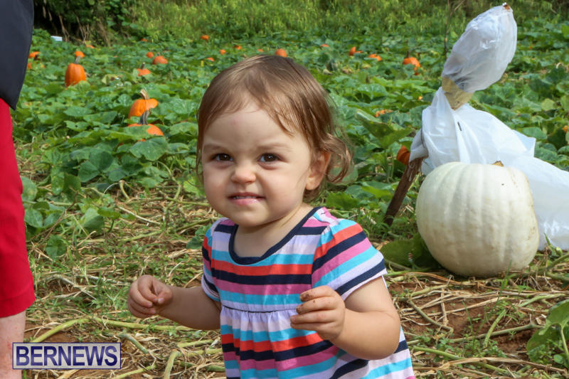 JJ-Produce-Pick-Your-Own-Pumpkins-Bermuda-October-23-2015-77