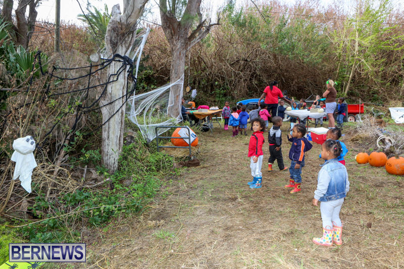 JJ-Produce-Pick-Your-Own-Pumpkins-Bermuda-October-23-2015-78
