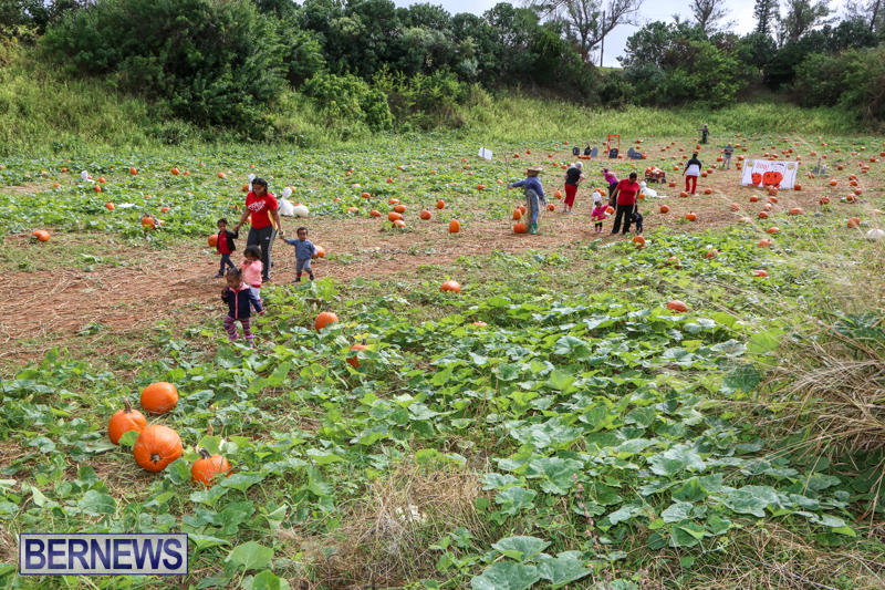 JJ-Produce-Pick-Your-Own-Pumpkins-Bermuda-October-23-2015-79