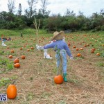 J&J Produce Pick Your Own Pumpkins Bermuda, October 23 2015-8