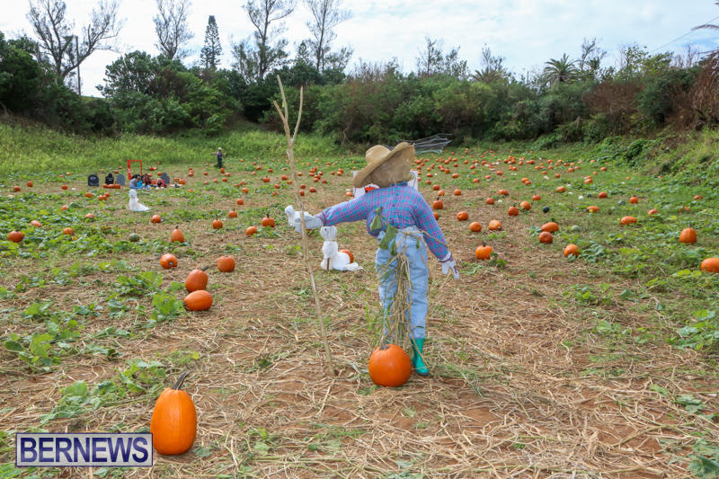 JJ-Produce-Pick-Your-Own-Pumpkins-Bermuda-October-23-2015-8