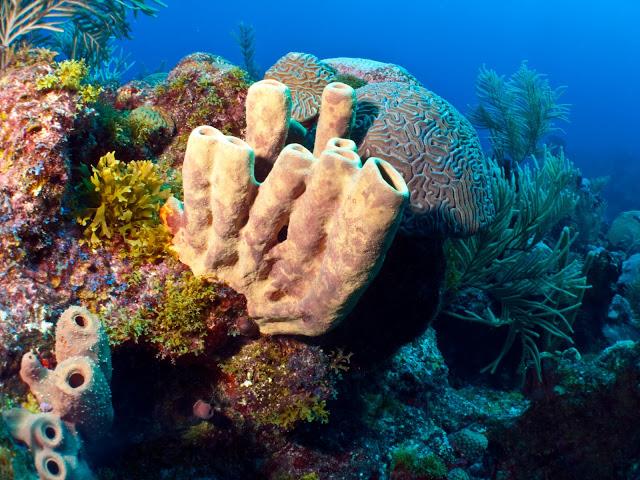 underwater-bermuda-by-Sergey-Goncharov-13