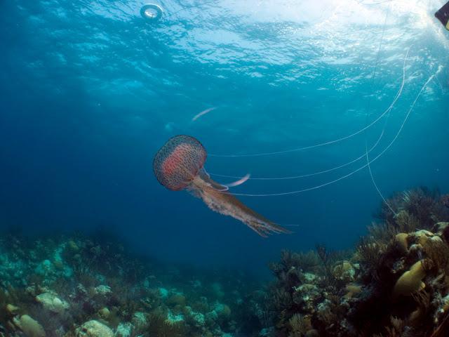 underwater-bermuda-by-Sergey-Goncharov-15