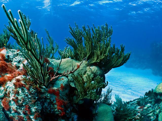 underwater-bermuda-by-Sergey-Goncharov-16