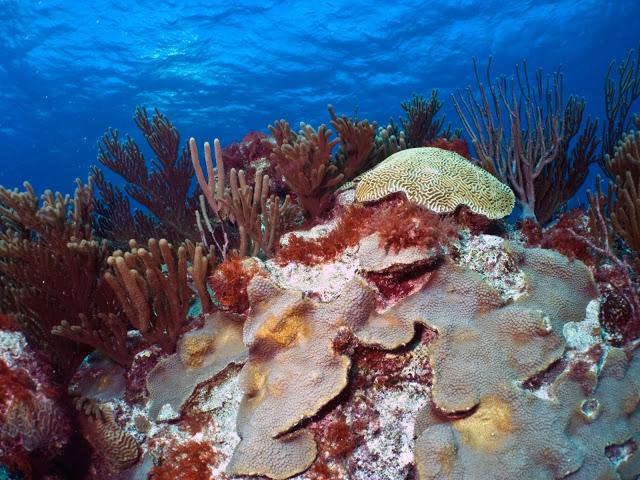underwater-bermuda-by-Sergey-Goncharov-18