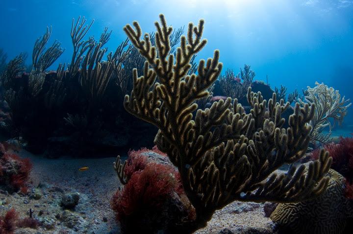 underwater-bermuda-by-Sergey-Goncharov-19