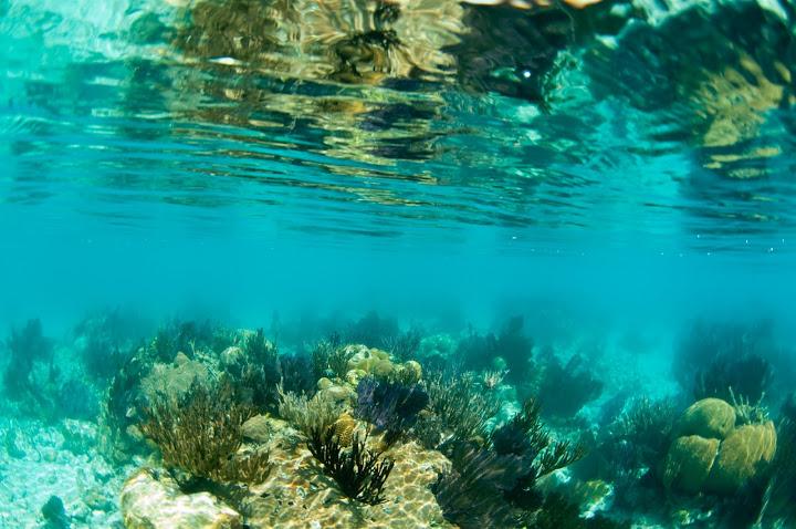 underwater-bermuda-by-Sergey-Goncharov-2