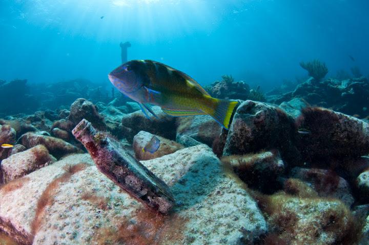 underwater-bermuda-by-Sergey-Goncharov-20