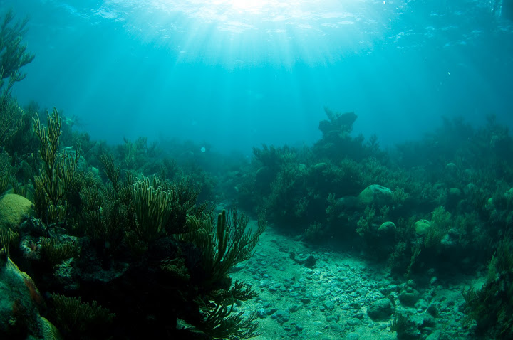 underwater-bermuda-by-Sergey-Goncharov-21