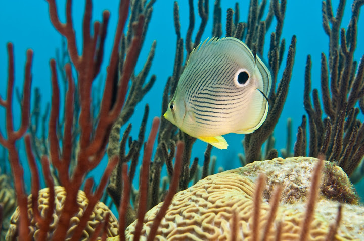underwater-bermuda-by-Sergey-Goncharov-4