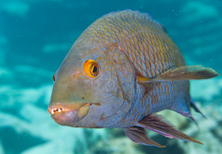 underwater-bermuda-by-Sergey-Goncharov-6