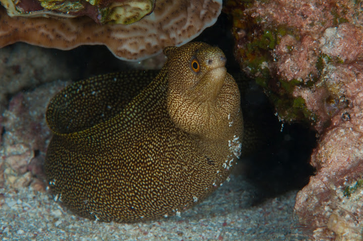 underwater-bermuda-by-Sergey-Goncharov-8