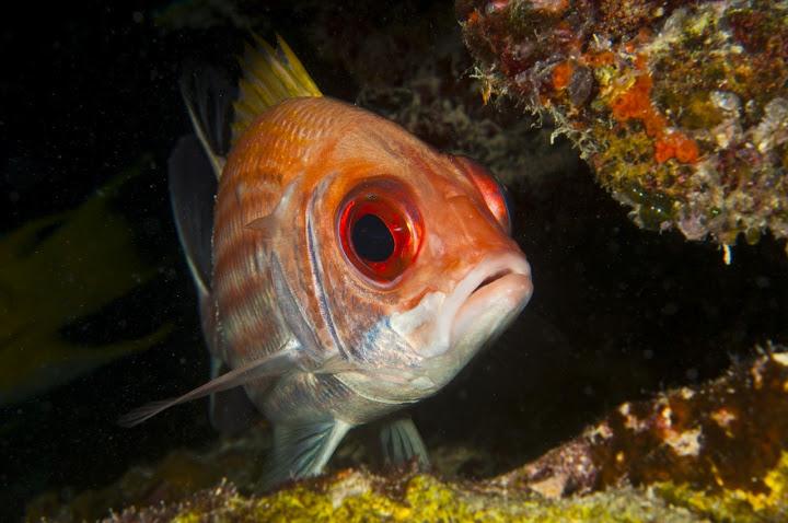 underwater-bermuda-by-Sergey-Goncharov-9
