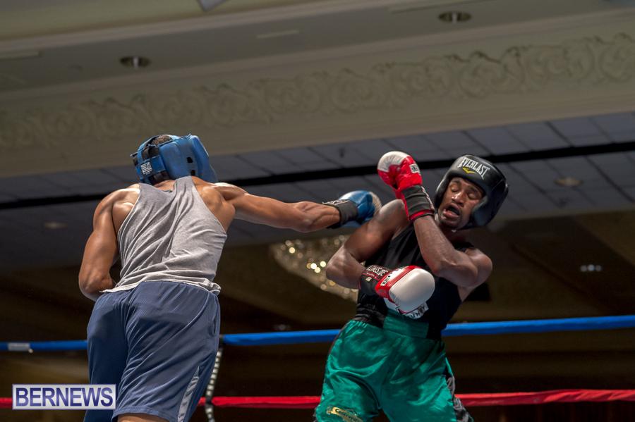 Bermuda-Boxing-JM-Nov-2015-28