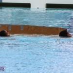 Cardboard Boat Challenge Bermuda, November 19 2015-100