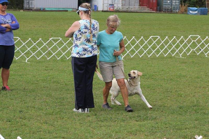 Dog Training Club Bermuda Nov 18 2015 2 (3)