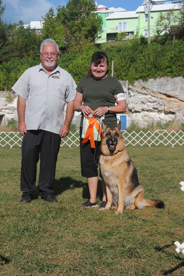 Dog Training Club Bermuda Nov 18 2015 2 (4)