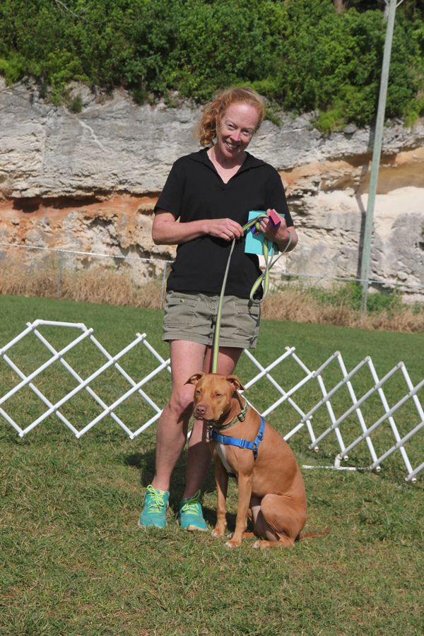 Dog Training Club Bermuda Nov 18 2015
