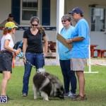 Dogs Agility Bermuda, November 7 2015-15