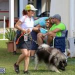 Dogs Agility Bermuda, November 7 2015-16