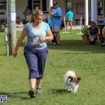 Dogs Agility Bermuda, November 7 2015-17