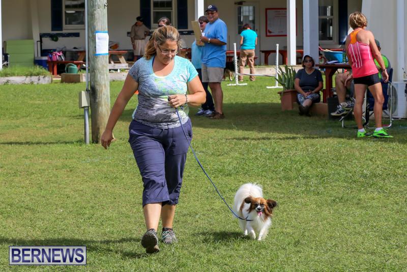 Dogs-Agility-Bermuda-November-7-2015-17