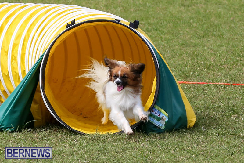 Therapy Dog Training Classes Maryland