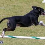 Dogs Agility Bermuda, November 7 2015-28