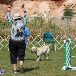 Dogs Agility Bermuda, November 7 2015-3