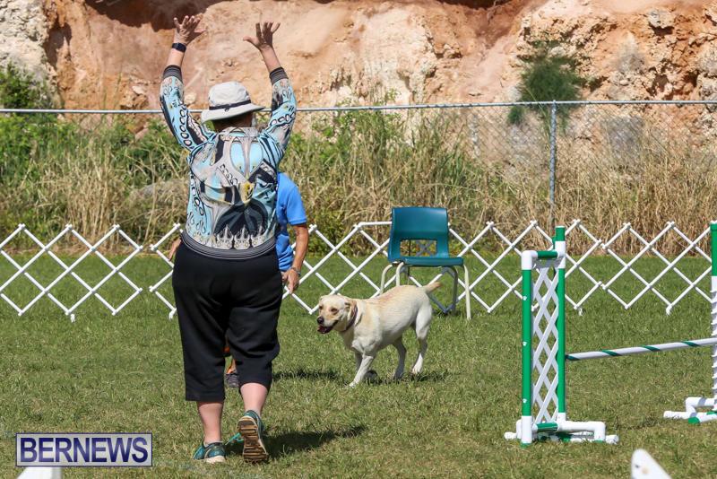 Dogs-Agility-Bermuda-November-7-2015-3