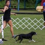 Dogs Agility Bermuda, November 7 2015-33
