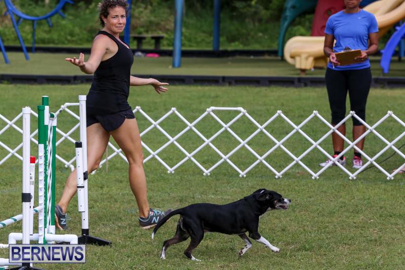 Dogs-Agility-Bermuda-November-7-2015-33