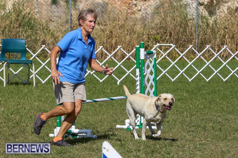 Dogs-Agility-Bermuda-November-7-2015-5