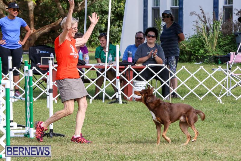Dogs-Agility-Bermuda-November-7-2015-57