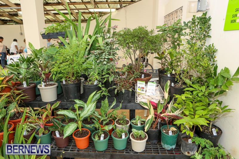Farmers-Market-Bermuda-November-28-2015-3