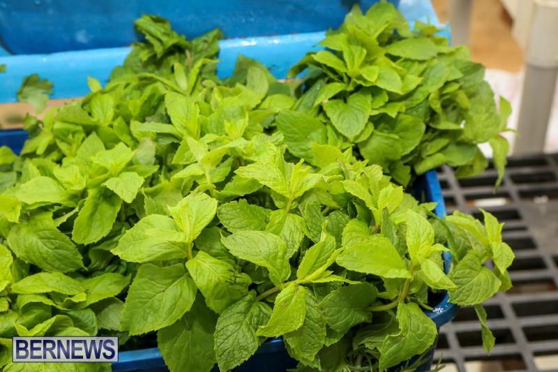 Farmers-Market-Bermuda-November-28-2015-37