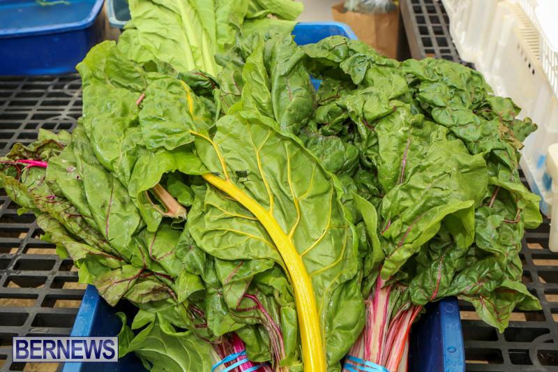 Farmers-Market-Bermuda-November-28-2015-39
