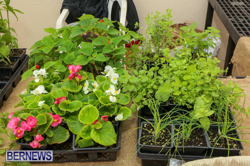 Farmers-Market-Bermuda-November-28-2015-41